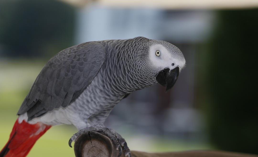 Корм для попугаев - рекомендации, советы, обзоры